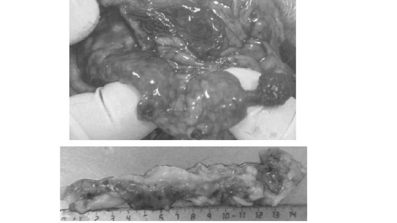 Аденокарцинома поджелудочной железы у кошек thumbnail